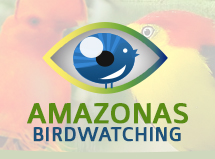amazonasbirdwatching