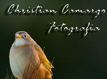 ChristianCamargo - Fotografia