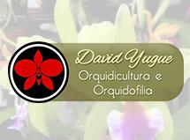 davidyugue
